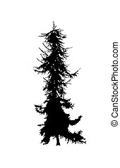 Silhouette of pine tree.
