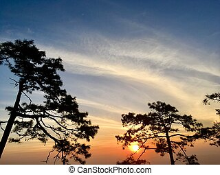 Silhouette of pine trees with sunset light and blue sky