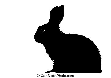 silhouette of rabbit - shape of rabbit isolated on white ...