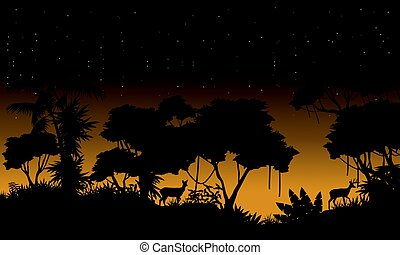 Silhouette of rain forest scenery