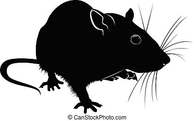silhouette of rat isolated on white background