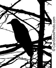 silhouette of raven on tree isolated on white background