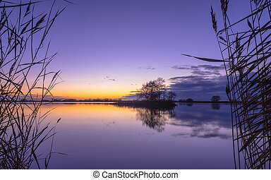 Silhouette of Reed with serene Lake during Purple Sunset