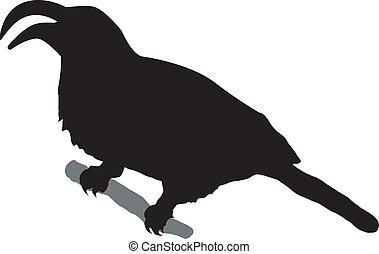 rhino bird