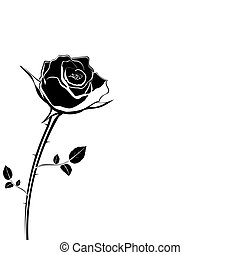 silhouette of rose flower on a white background