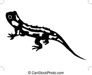 silhouette of salamander