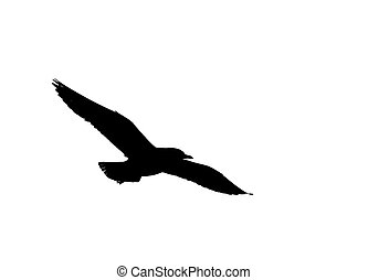 silhouette of seagull flying