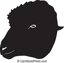 silhouette of sheep