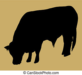 silhouette of simmental bull - australian beef cattle breed