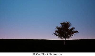 Silhouette of single tree on dusk sky