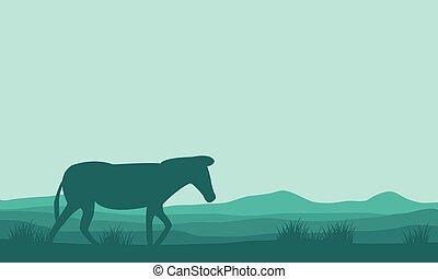 Silhouette of single zebra in hills