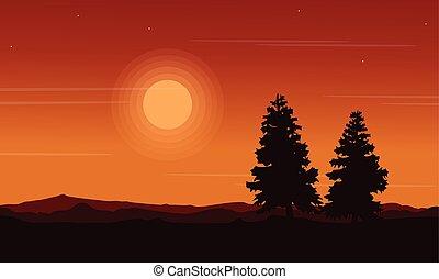 Silhouette of spruce beauty landscape
