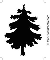 spruce - silhouette of spruce