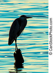 Silhouette of standing heron