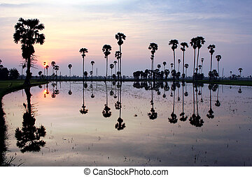 silhouette of sugar palm tree on reflection