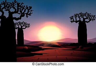 Silhouette of sunset in desert