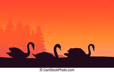 Silhouette of swan at sunset scenery