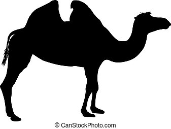 Silhouette of the camel on a white background