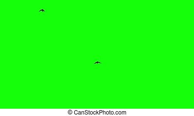 Silhouette of the flying birds. Chroma Key