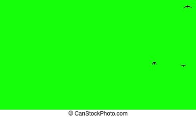 Silhouette of the flying birds. Chroma Key, greenscreen