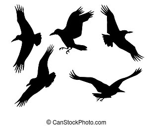 silhouette of the group raven isolated on white background