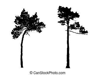 silhouette of the  pine in wood