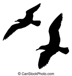 silhouette of the sea gull on white background