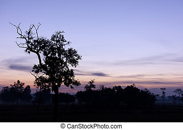 Silhouette of the tree at dusk with sky.