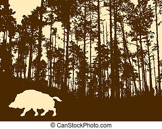 silhouette of the wild boar in thick wood