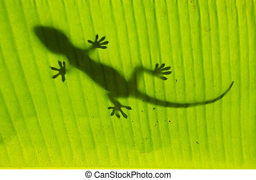 Silhouette of tokay gecko on a palm tree leaf, Ang Thong...