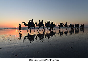 Silhouette of tourists on camel ride Cable Beach Broome Kimberley Western Australia