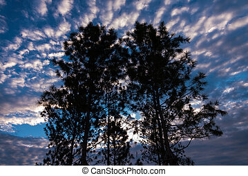 Silhouette of tree against a blue sky