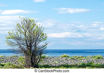Silhouette of tree against blue sky and lake Baikal background.