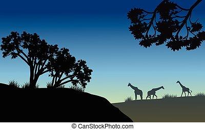 Silhouette of tree and giraffe