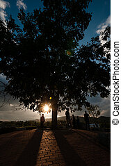 silhouette of tree and people on hill