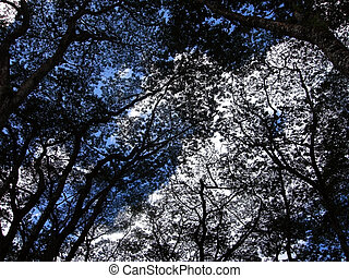 Silhouette of tree branches against Sky