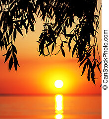 Silhouette of tree branches and sea at sunset
