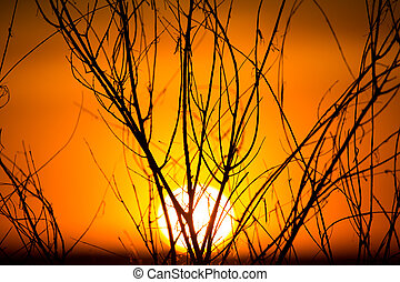 Silhouette of tree branches at the golden sunset