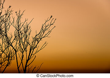 Silhouette of tree branches.