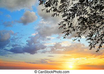 Silhouette of tree branches with colorful sunset sky.