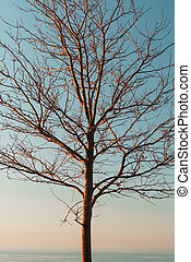 Silhouette of tree branches without leaves on a sky blue background.