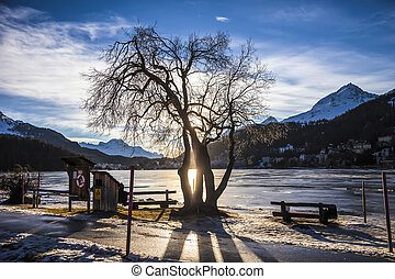 Silhouette of tree during sunset, frozen lake