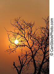 Silhouette of tree on the evening sunset.