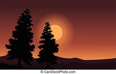Silhouette of tree spruce scenery