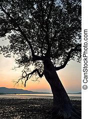 Silhouette of tree sunset