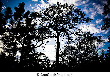 Silhouette of tree with blue sky background