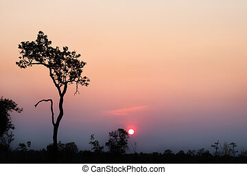 Silhouette of tree with sunset in the evening.