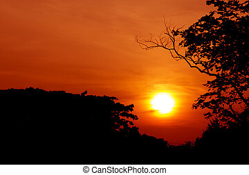 silhouette of tree with sunset