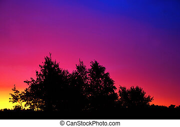 trees at colorful sunrise