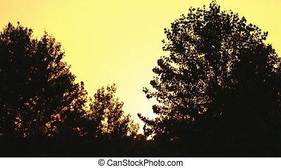 Silhouette of trees at sunset.